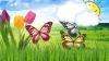 Povestea celor trei fluturași